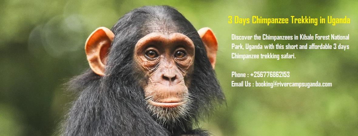 Rweteera Safari Park chimpanzee trekking